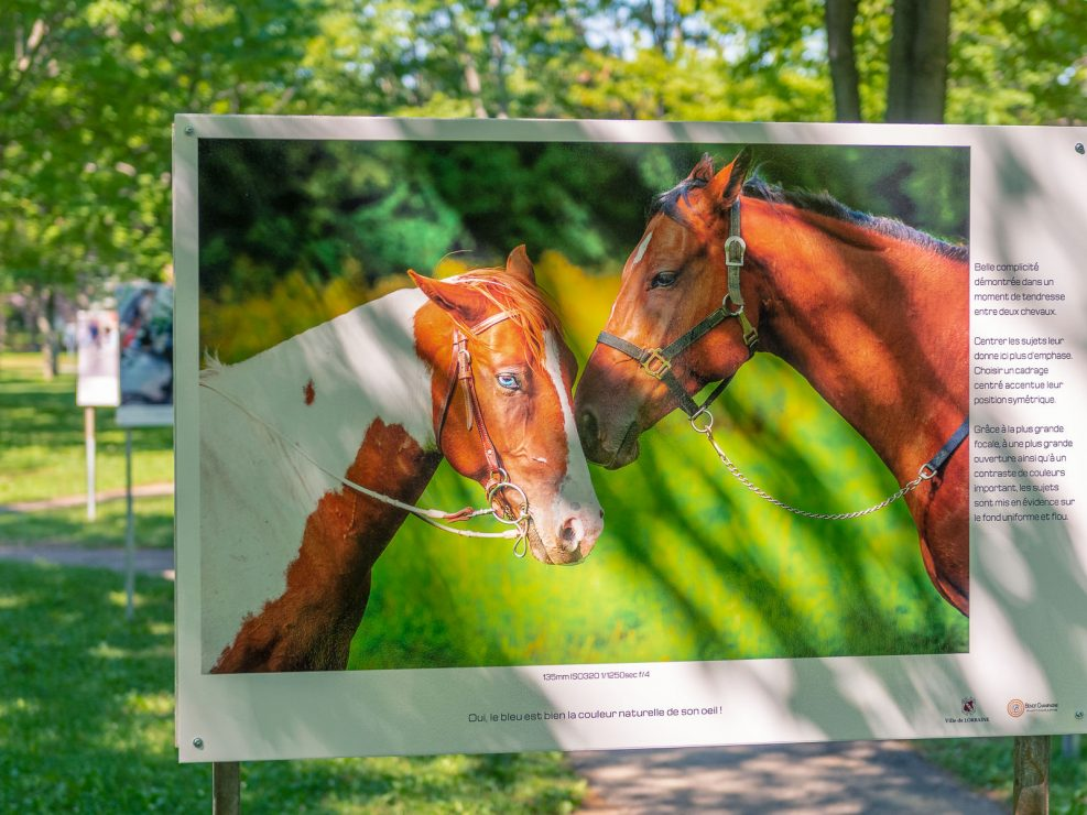 Deux chevaux en grande discussion !  Panneau exposition en plein air au parc Lorraine, KW:  Lorraine