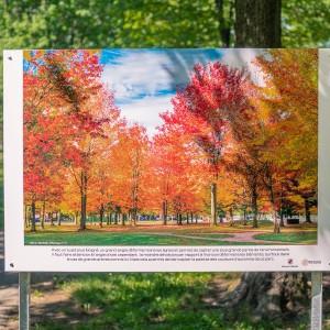 Parc de Lorraine dans les vives couleurs d'automne. Panneau exposition en plein air au parc Lorraine, KW: Lorraine