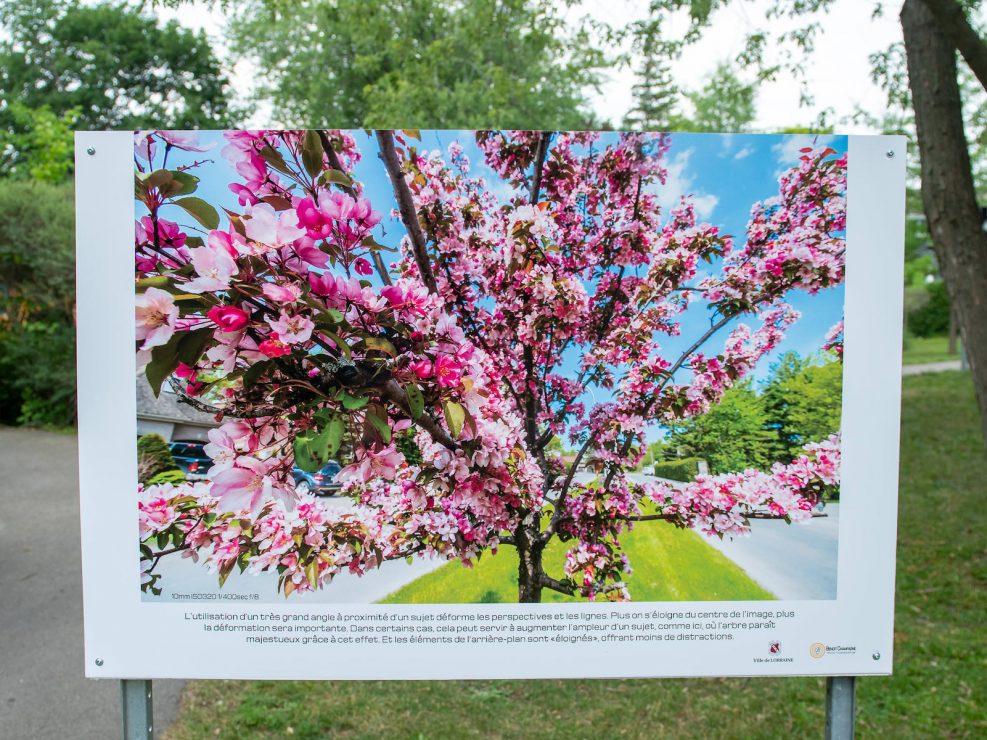 exposition ville Lorraine pommier en fleur grand angle